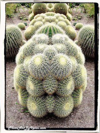 Cactus RF1 WS HL