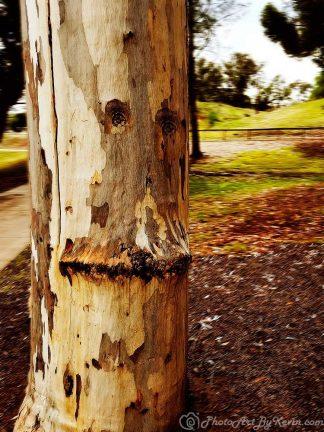 Tree Face2 Soft Light