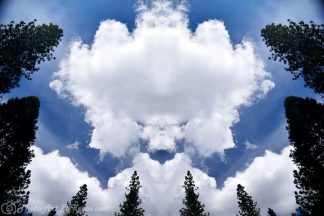Yosemite Tree Clouds
