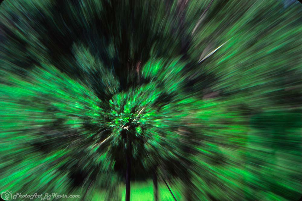 Zoom Tree