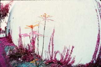 Colorful Laguna Plants