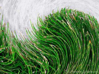 Bamboo Swirl