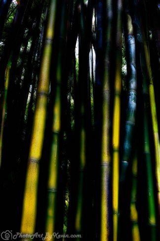 Ethereal Bamboo Jungle