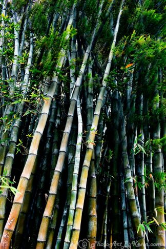 Bamboozled with Bamboo