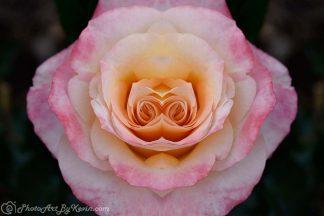Flower Named Adia