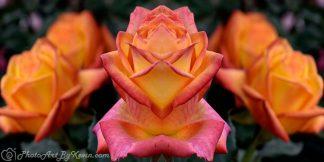Judy Garland Flower