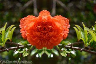 Faux Paper Roses