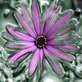Future Flower