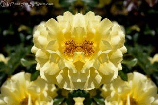 Duckling Flower