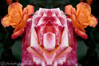Carmen Miranda Flower