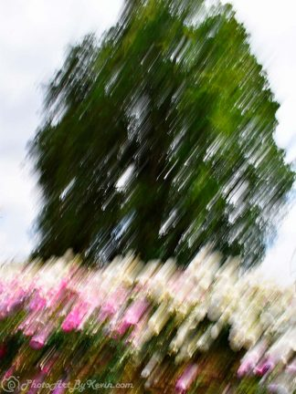 Tree and Flowers Photo Art