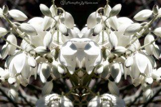 Flowery Whiteness