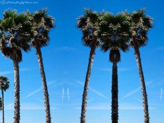 Bodacious Arecaceae Trees