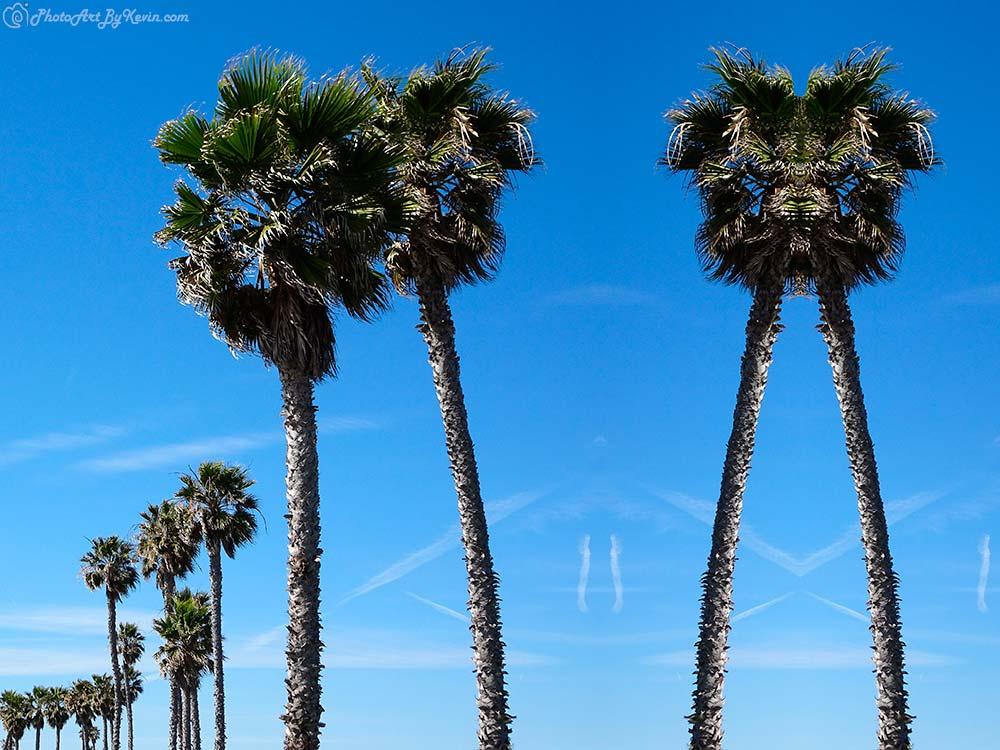 Palm Reader Trees