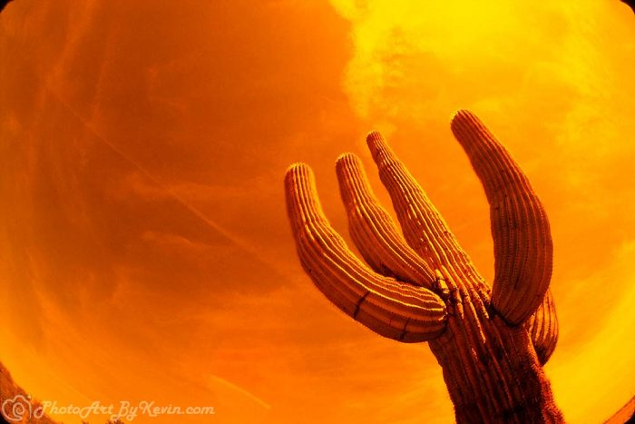 Dry Heat Cactus