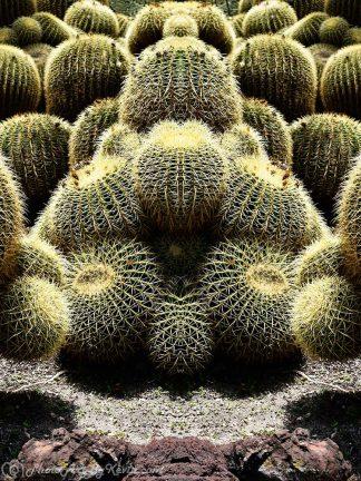 Zen Cactus
