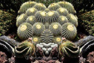 Double Barrel Cactus