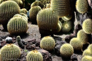 Cacti Morphing