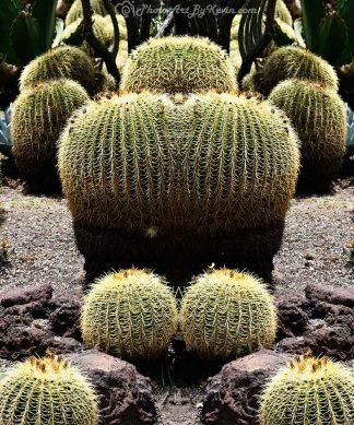 Double Trouble Cactus