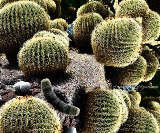 Over the Edge Cacti