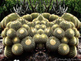 Haunting Cactus Crowd