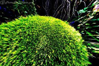 Hedgehog Hedge