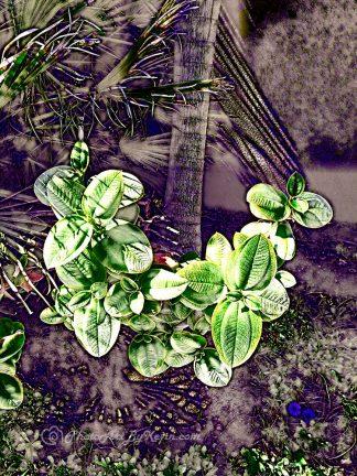 Real Surreal Plants