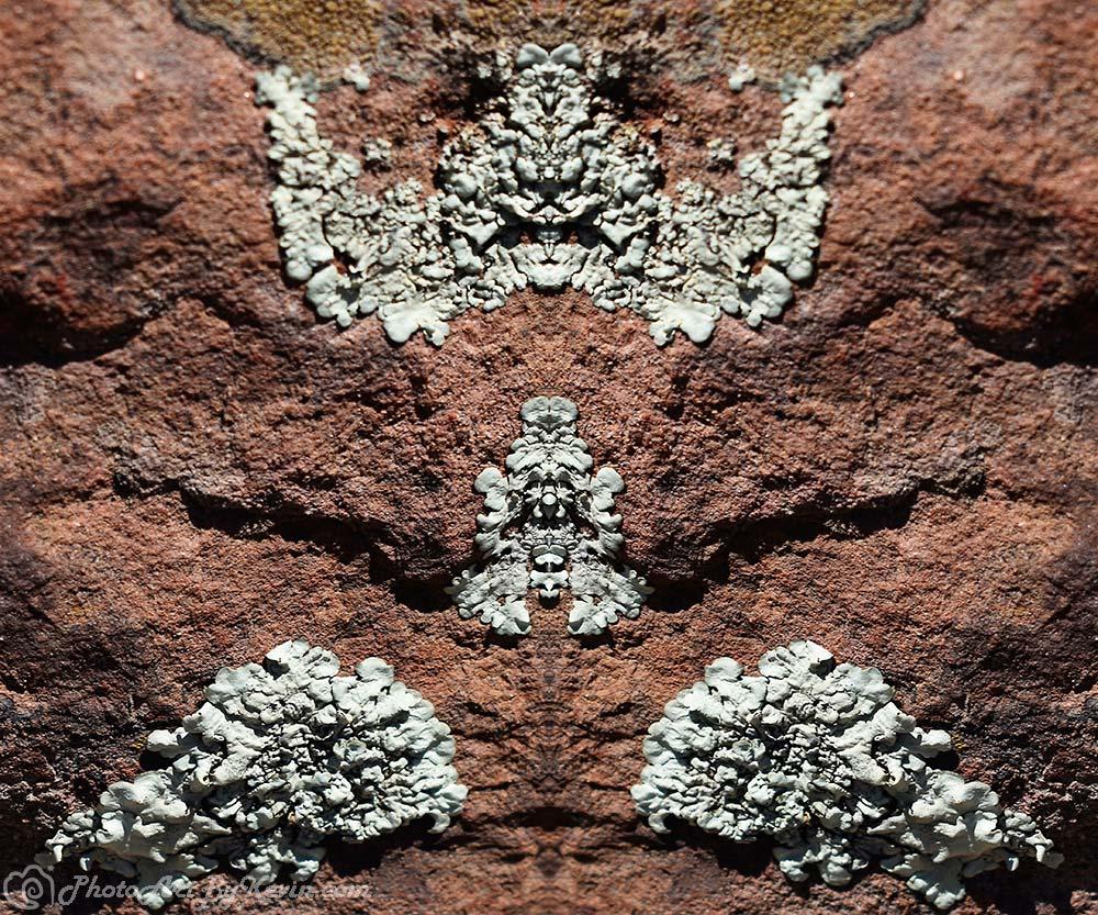 Lichen This Rock
