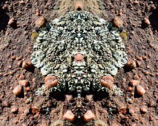 Textured Lichen Rock