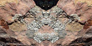 Pictographic Lichen Art