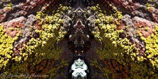 Indigenous Lichen Art