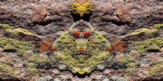 Liken the Lichen