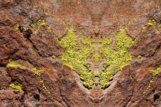 Rockin' the Lichen