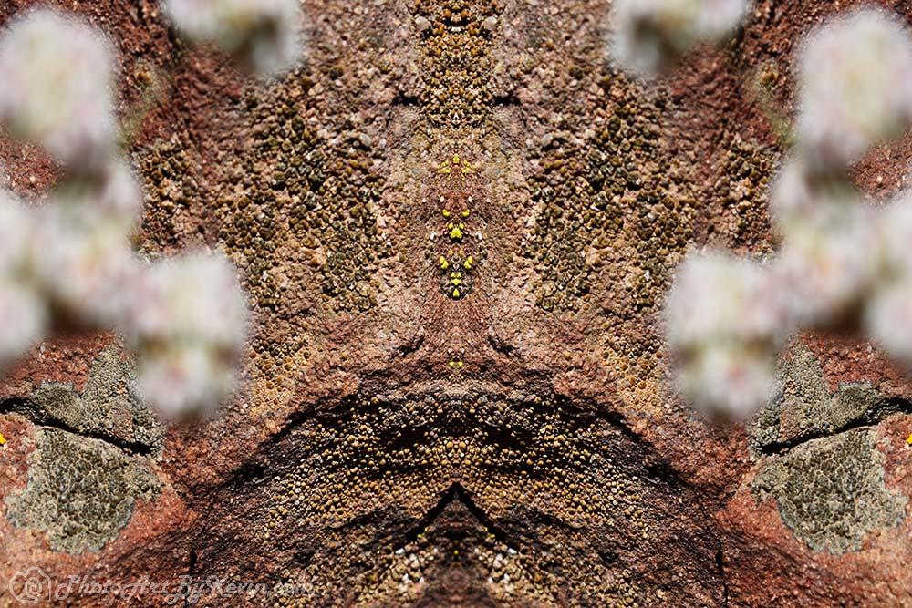Rock Flowers Lichen