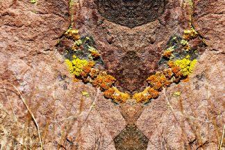 Lichen Sideburns