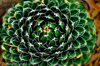 Circular Reasoning Succulent