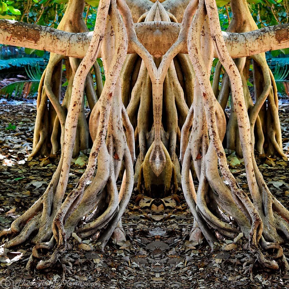 Tangled Web Tree