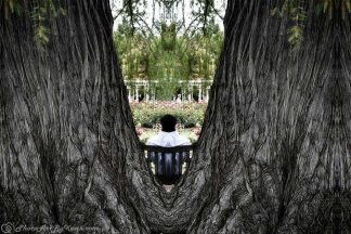 V Tree Meditation