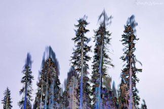 Transcendent Trees