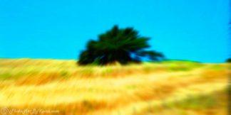 Field O Tree