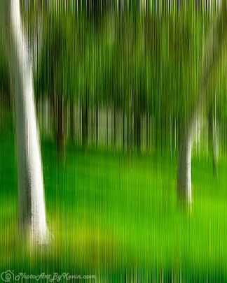 Tree Abstractica
