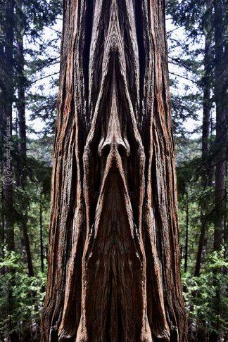 Nose Tree