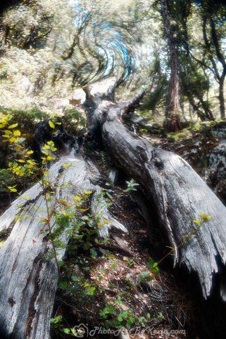 Fantasia Forest