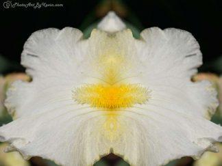 Flower Double-Wide