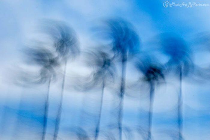 Swaying Palm Trees of Huntington Beach, California