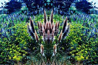 Color Explosion of Plants in Big Sur, CA