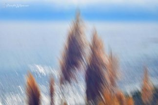 Foxy Foxtails Abstract in Big Sur, CA